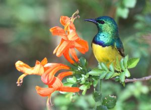 Conservancies: Frontier of the Magaliesberg Biosphere