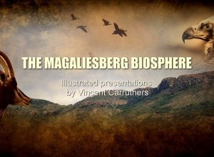 Introduction to the Magaliesberg – Part 1