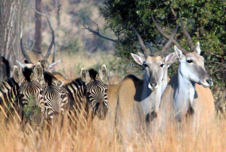 Read more about the article 2015 June – The Magaliesberg has been declared a World Biosphere Reserve!